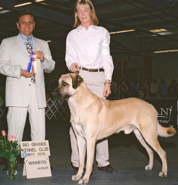 """2006 American Champion Clearlake One More Time, """"Toby"""""""
